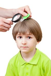 Head Lice Check